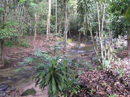 sungai congkak recreational forest hulu langat, selangor, malaysia