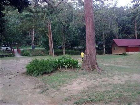 D Congkak Forest