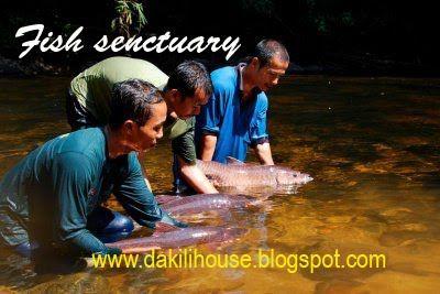 DakiliHouse Taman Negara Pahang